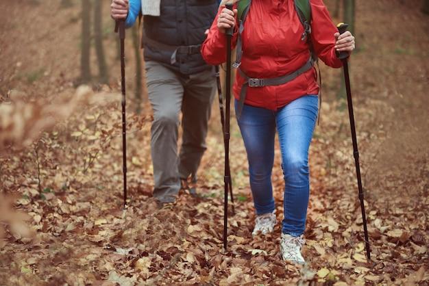 Moeilijk pad in het bos