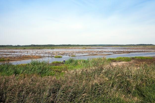 Moeras, het einde van de zomer - het grondgebied waarop zich een moeras bevindt, het zomerseizoen van het jaareinde, wit-rusland