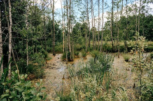 Moeras in het bos