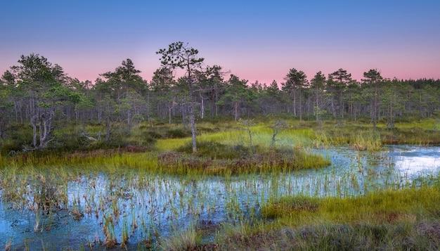 Moeras in het noorden met kleine bomen bij zonsondergang. kleurrijk zomerlandschap