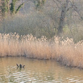 Moerasgras, stilstaand water en bos