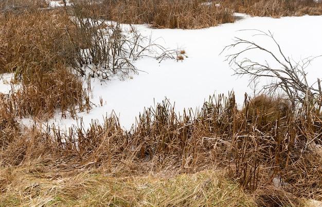 Moerassig gebied bedekt met ijs van de sneeuw in het winterseizoen, details van de natuur
