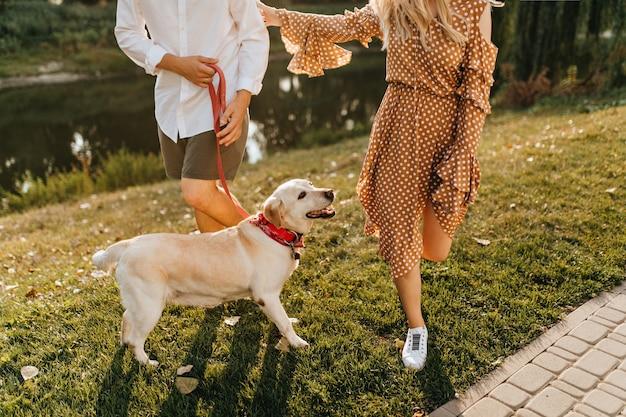 Momentopname van labrador in rode kraag die zich in wandeling in park met zijn meester en minnares verheugt.