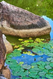 Monitor hagedis in een meer in een groen recreatiepark in azië.