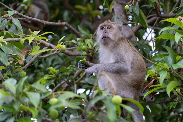 Monket vindt iets te eten aan de boom