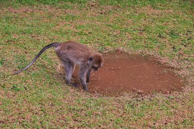 Monkey forest, bali zoo, indonesië