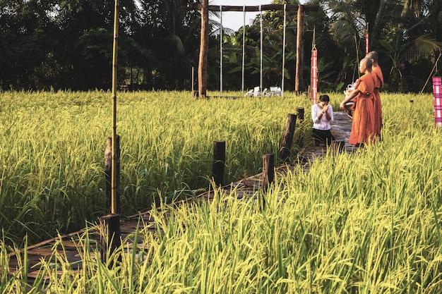 Monnik met paddy rice-gebied in thailand