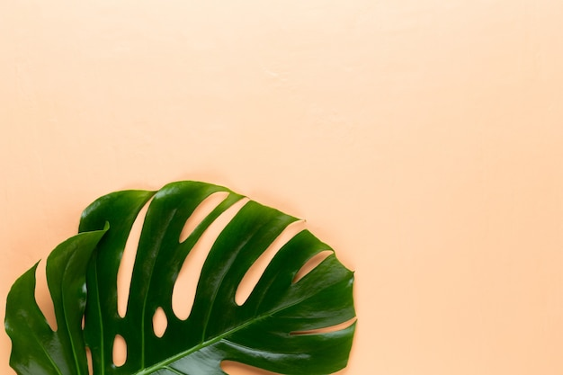 Monstera blad bovenaanzicht