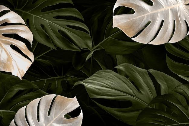 Monstera blad luxe sociale media banner tropische jungle achtergrond Gratis Foto
