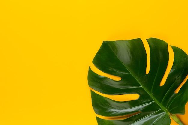 Monstera blad op kleur.
