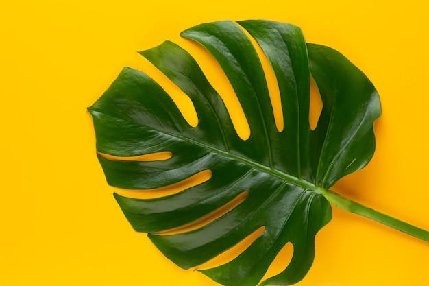 Monstera blad op kleurentafel
