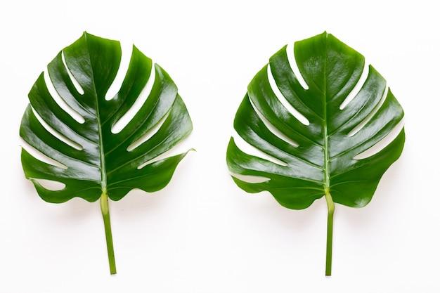 Monstera blad op witte houten achtergrond