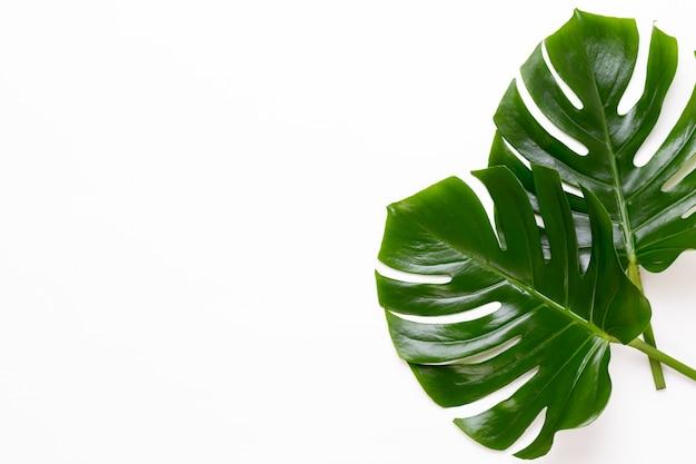 Monstera blad op witte houten tafel