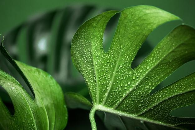 Monstera bladeren op een groene achtergrond