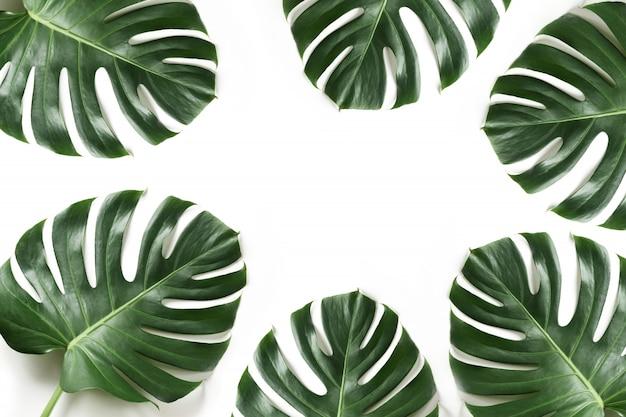 Monstera gebladerte als grens op wit. geïsoleerd met zomer frame voor ontwerp.