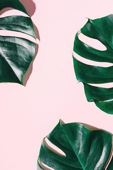 Monstera groene bladeren op roze