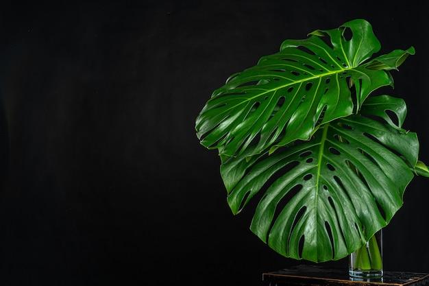 Monstera tropische plant blad op zwarte muur