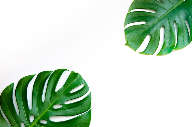 Monstera verlaat bladeren met isolaat op witte achtergrond bladeren op wit