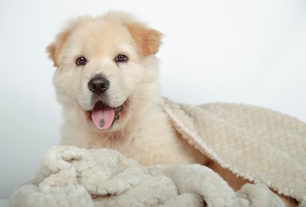 Mooi bastaarde puppy dat met zijn deken wordt omringd