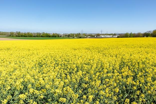 Mooi bastgebied met groene wilde bloemen en een blauwe hemel