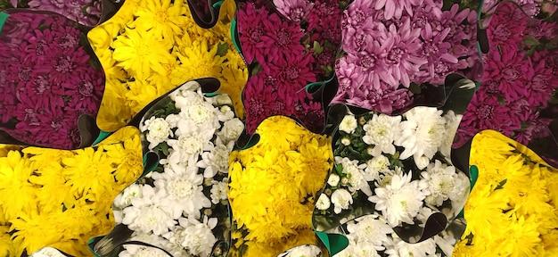 Mooi behang van verschillende chrysantenbloemen. natuur herfst bloemen achtergrond. chrysanten bloeien seizoen. veel chrysantenbloemen groeien in potten te koop in de bloemenwinkel