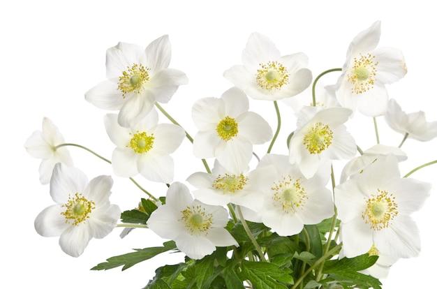 Mooi boeket van delicate witte bloemen geïsoleerd op een witte achtergrond