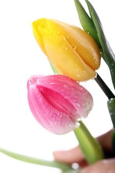 Mooi boeket van tulpen, kleurrijke tulpen, aardachtergrond