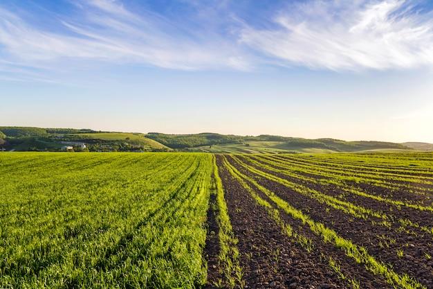Mooi breed vredig panorama van geploegde en groene velden verlicht door ochtendzon die zich uitstrekt tot horizon onder heldere blauwe hemel op verre heuvels en dorp. landbouw en landbouw concept.