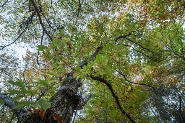 Mooi de herfstkastanje bos in monchique-gebied, portugal