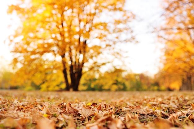 Mooi de herfstlandschap - park met steegjes, gele droge bladeren, bladeren.