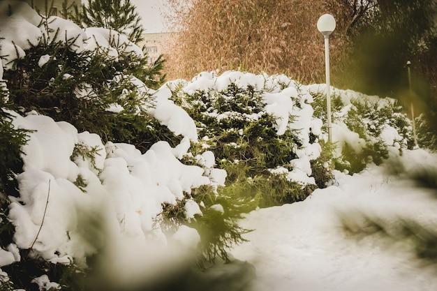 Mooi de winterlandschap met sneeuw behandelde bomen