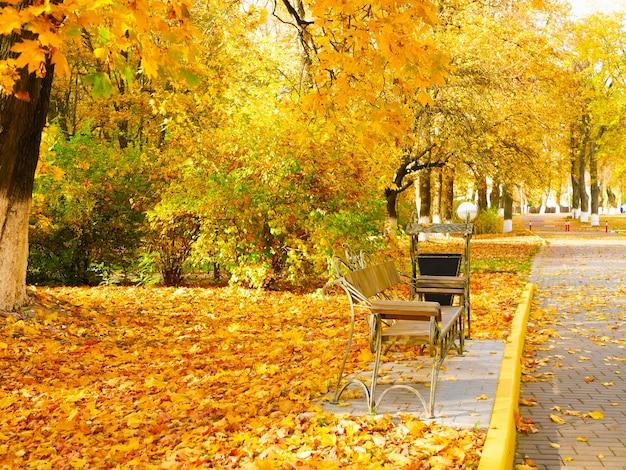 Mooi geel gebladerte in het park