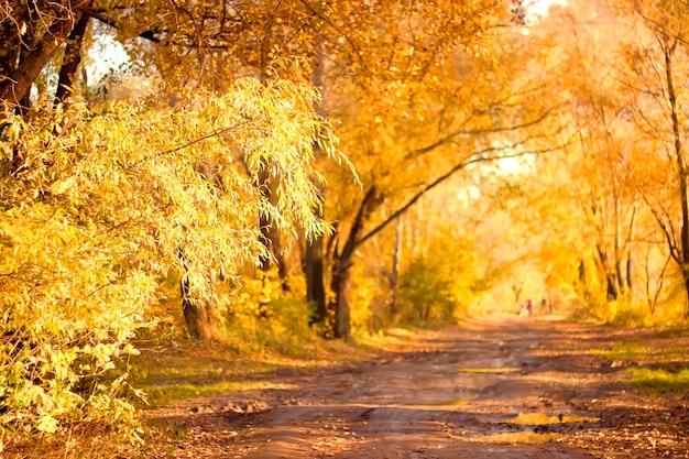 Mooi gekleurd geel boslandschap in de herfst met onverharde weg voorgrond focus kopieerruimte