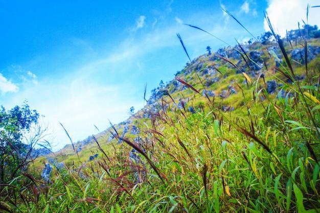 Mooi gras bloemen landschap van rotsachtige kalksteen berg en groen bos