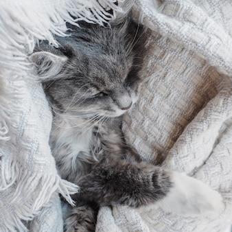 Mooi, grijs, pluizig katje dat zacht slaapt