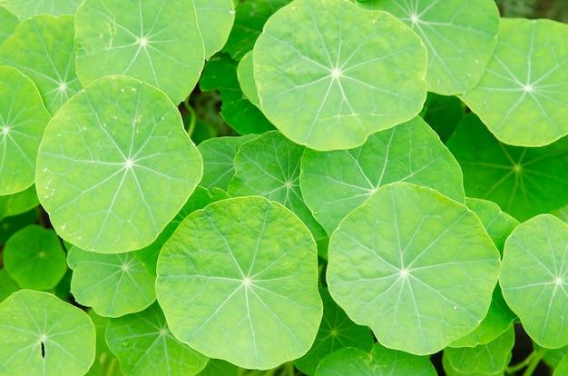 Mooi groen blad voor aardachtergrond