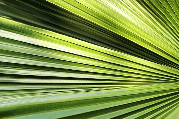 Mooi groen palmbladclose-up die in openlucht groeien. zachte en wazige conceptie