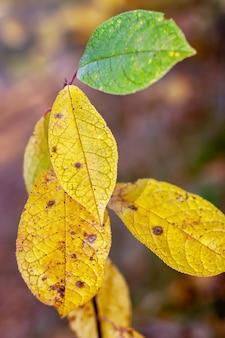 Mooi groot geel en groen blad in de herfst in de zon. selectieve focus op de bladeren. verticaal.