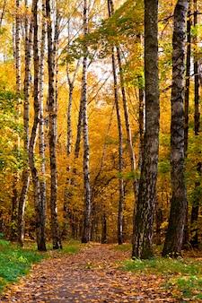 Mooi herfstpark met kleurrijke bladeren