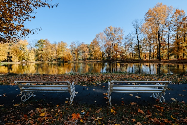 Mooi herfstpark met meer bij zonnig weer