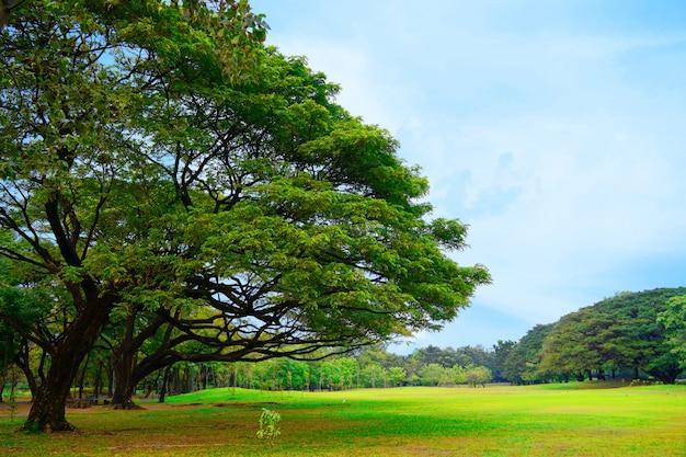 Mooi het park van het landschapsbomen groen en vers groen gazon