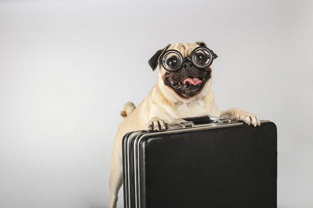 Mooi hondenras carlino met glazen fles kontpasta geüpload in een uitvoerende aktetas.