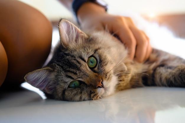 Mooi huisdier in menselijke hand met dicht omhooggaand schot.