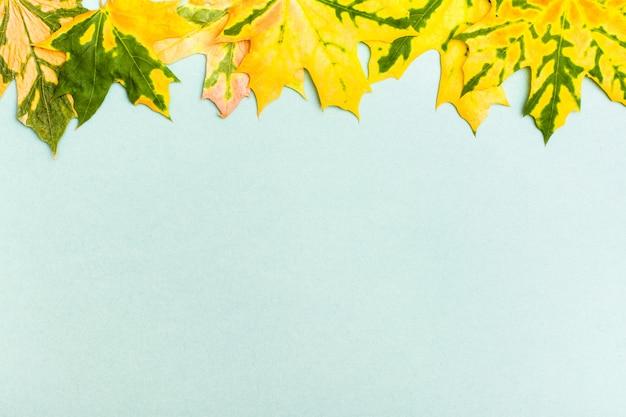 Mooi kader van geelgroene gevallen esdoornbladeren op een karton