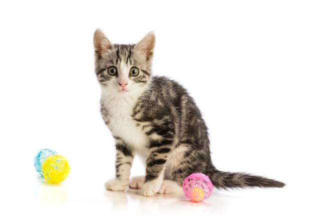 Mooi katje dat met wat speelgoed wordt geïsoleerd