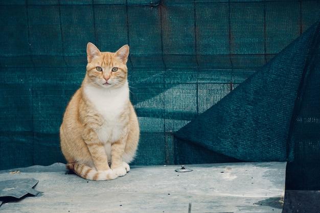 Mooi kattenportret in de straat