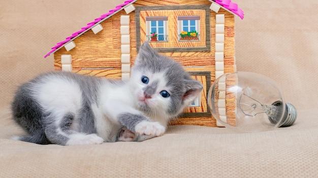 Mooi klein katje in de buurt van het speelgoedhuis en de gloeilamp