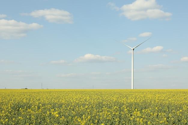 Mooi koolzaad veld met windmolens tegen blauwe hemel