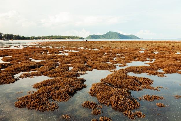 Mooi koraalrif tijdens ebwater in het overzees bij eiland phuket.