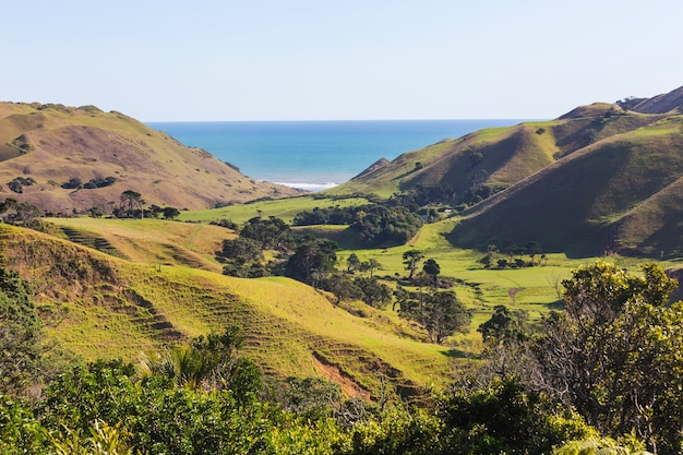 Mooi landelijk landschap van nieuw-zeeland - groene heuvels en bomen